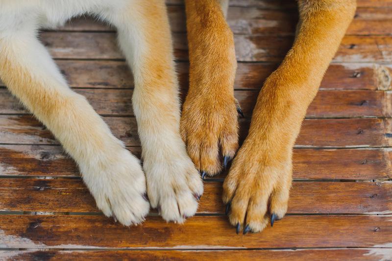 pets-nails